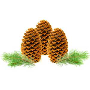 Pinecone Firestarters Recipe