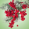 Pepperberry Wreath Fragrance Oil