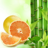 Bamboo and White Grapefruit Fragrance Oil