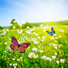 Butterfly Meadows Fragrance Oil