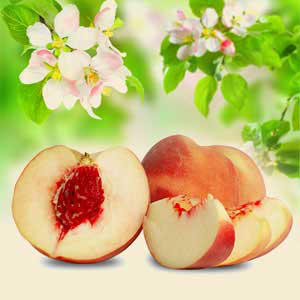 White Peach and Silk Blossoms Fragrance Oil