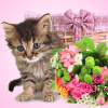 Pretty Kitty Fragrance Oil