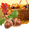 Acorn Harvest  Fragrance Oil