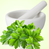 Cool Cilantro Fragrance Oil