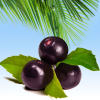 Acai Berry Fragrance Oil